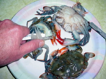Cleaning Soft Shell Crab